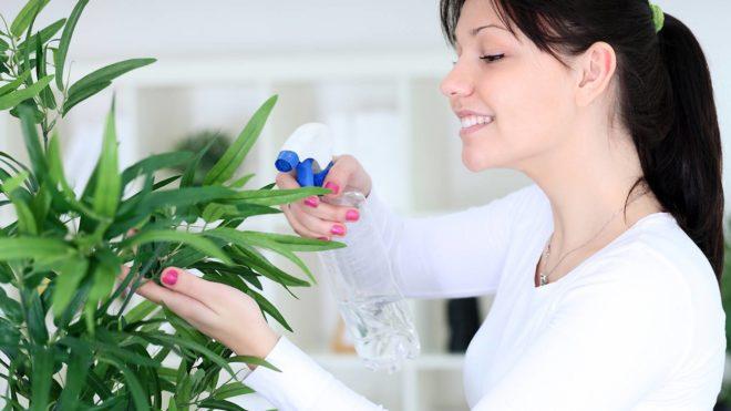 Когда пересаживать комнатные растения в марте 2020 - самые благоприятные дни