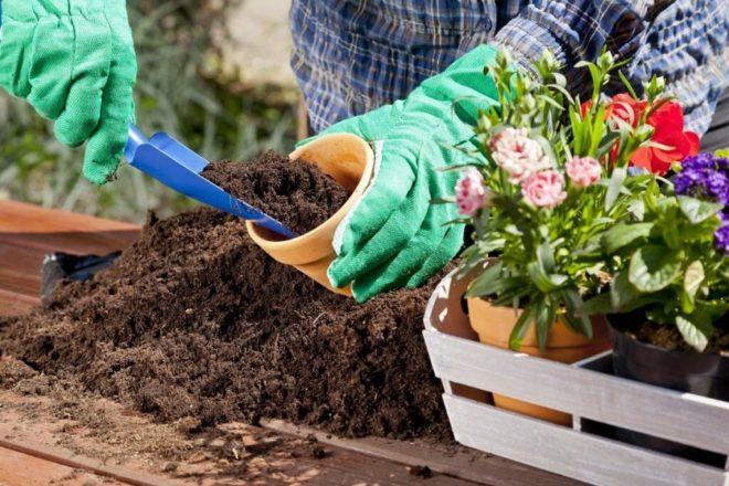 Когда пересаживать комнатные растения в феврале 2020 - самые благоприятные дни