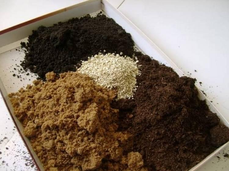 Какие семена перца самые лучшие для открытого грунта