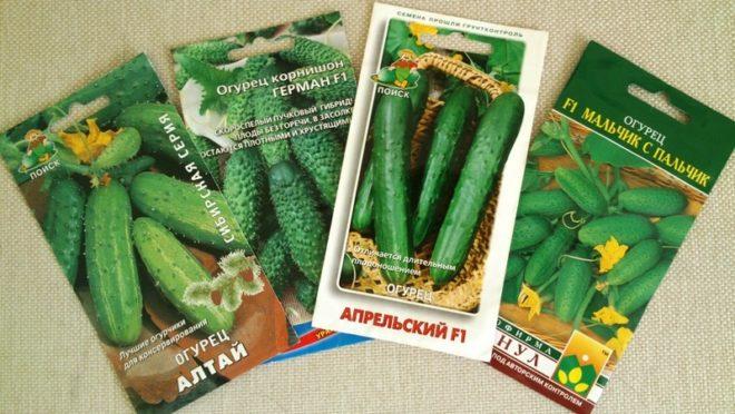 Самые урожайные и вкусные самоопыляемые семена огурцов