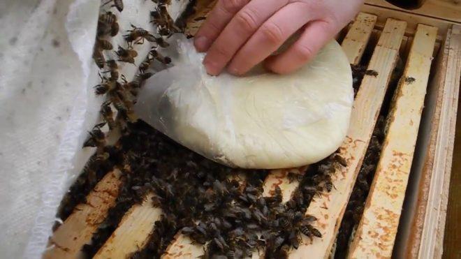 Как сделать канди для пчел зимой