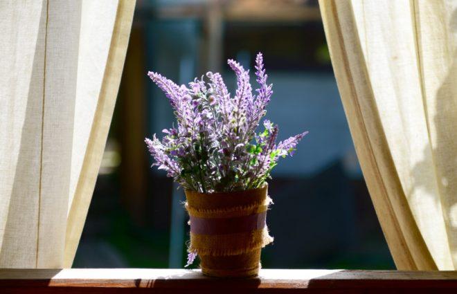 Как вырастить лаванду дома на подоконнике