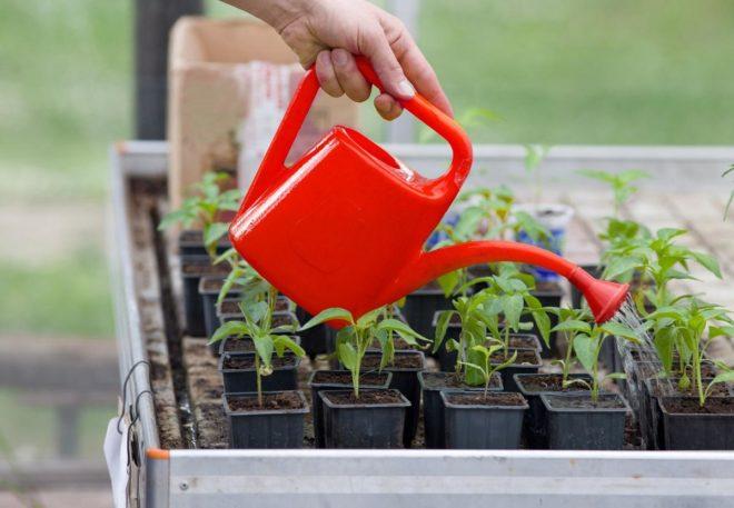 Благоприятные дни для посева перца в апреле 2020