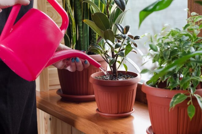 Когда пересаживать комнатные растения в мае 2020 - самые благоприятные дни