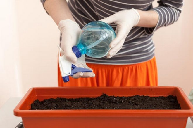 Как вырастить портулак семенами
