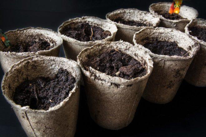 Благоприятные дни для посева перца в мае 2020