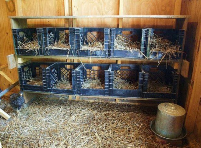 мосты очень как сделать гнездо для курицы несушки фото французского