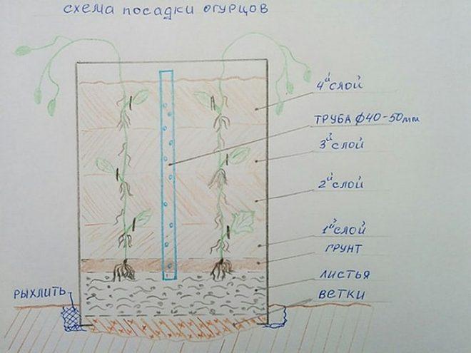Как посадить огурцы в бочке на даче