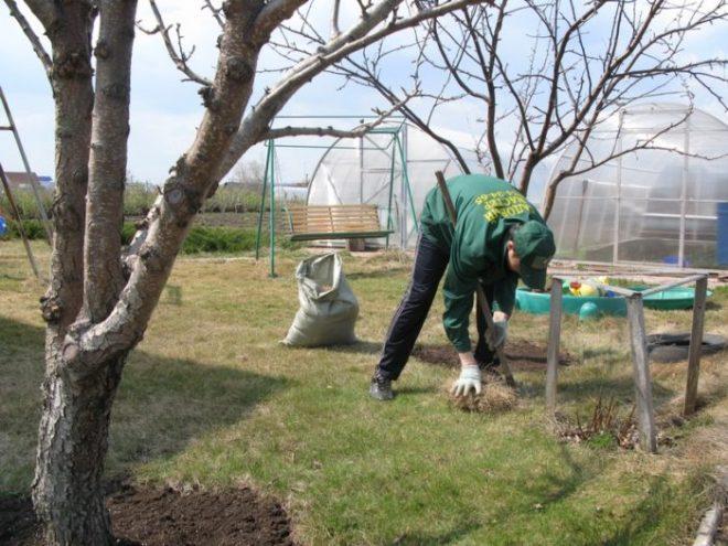 Что нужно делать весной на даче в первую очередь