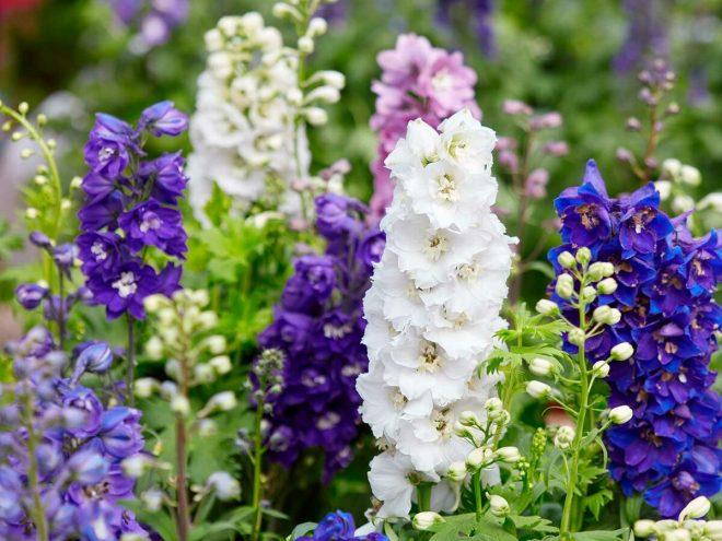 Какие цветы посадить на рассаду в июне 2020
