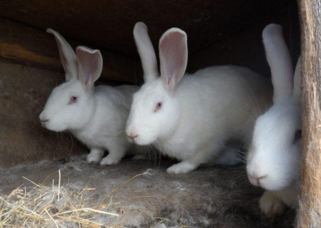 Как сделать клетку для кролика