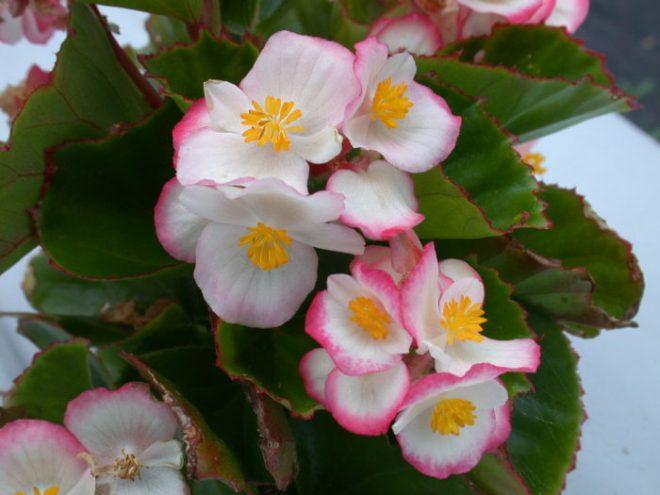 Какие цветы посадить на рассаду в феврале 2021 для цветения этим летом