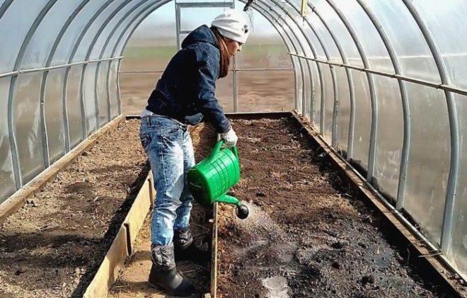 Обработка земли в теплице перед посадкой
