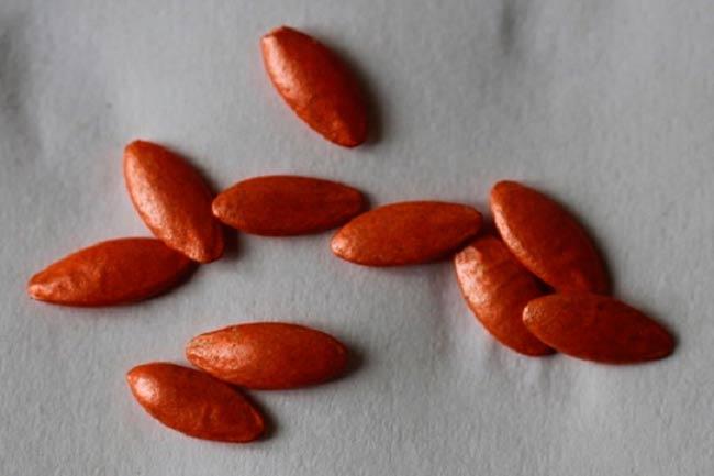 Надо ли замачивать семена огурцов
