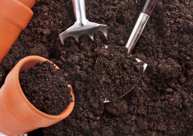 Как вырастить финики из косточки