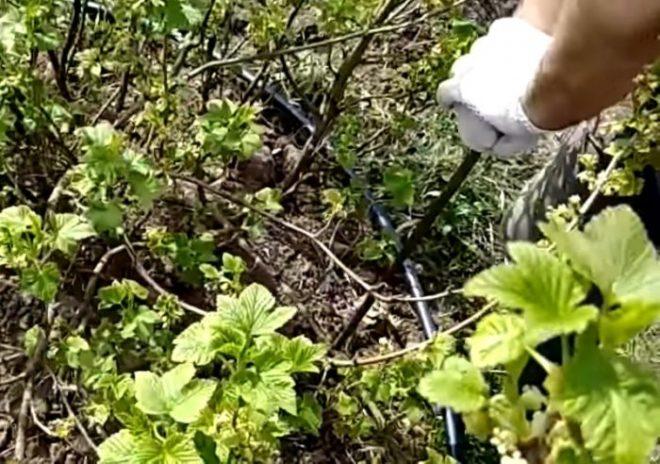 Делаем регулируемую опору для ягодного куста