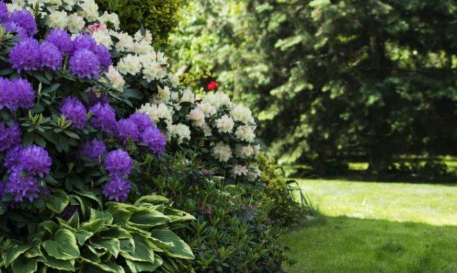 Многолетние тенелюбивые цветы для сада, цветущие все лето