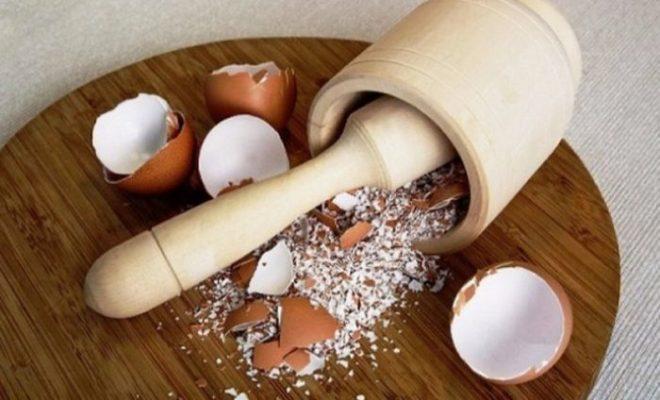 Как и чем подкормить огурцы в теплице и открытом грунте