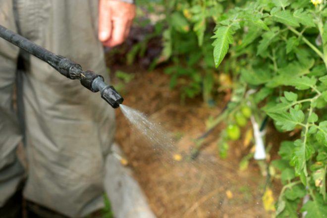 Чем подкормить помидоры в теплице от высадки до сбора урожая