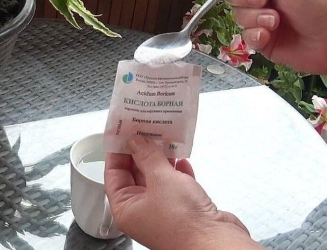 Как быстро избавиться от луковой мухи