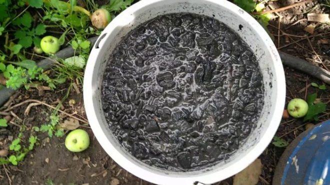 Как и чем подкормить капусту после высадки в открытый грунт