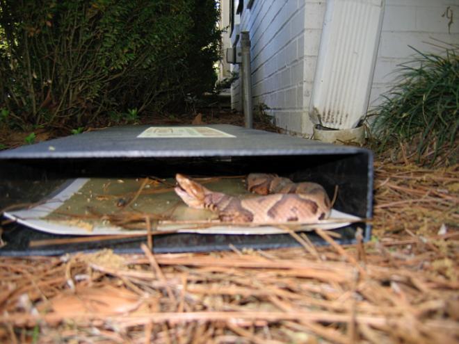 Как прогнать змей с дачного участка раз и навсегда