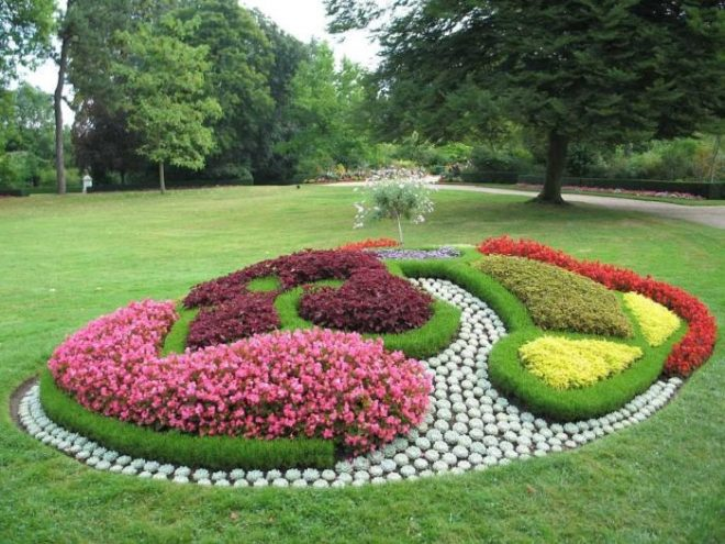 Дизайн цветников и газонов фото клематиса