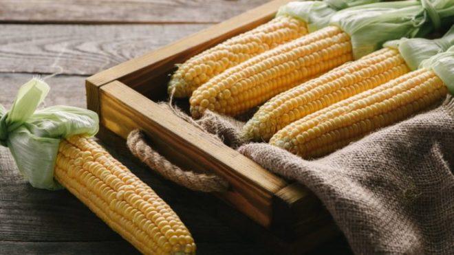 Как хранить свежую кукурузу в початках
