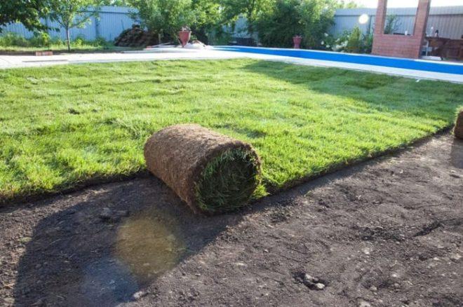 Как сделать газон для ленивых своими руками