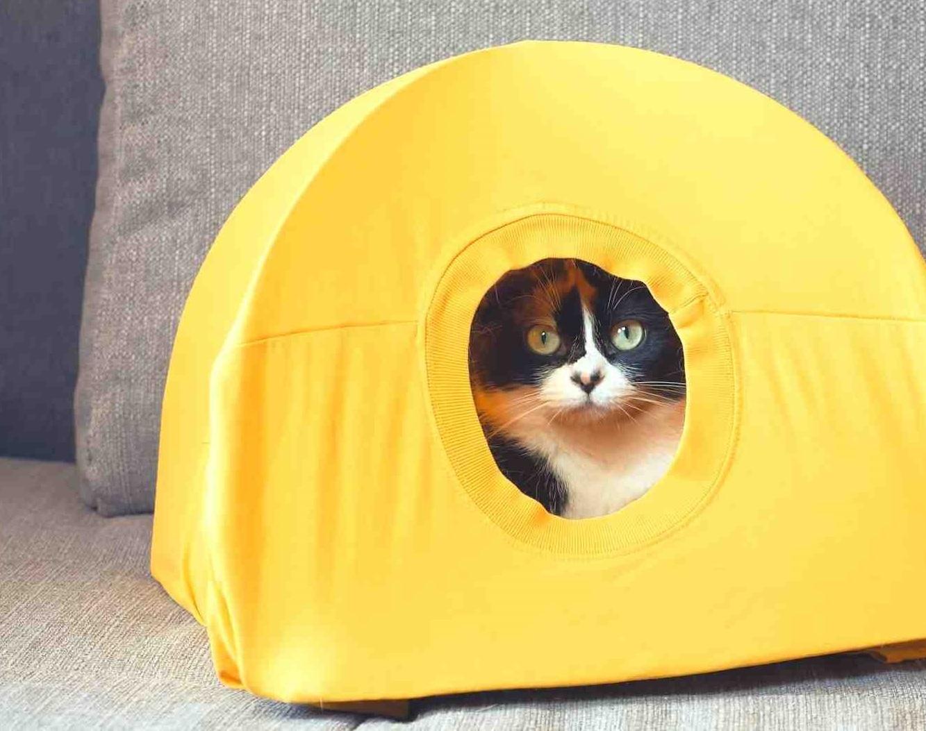 Как сделать дом для кошки своими руками? Из коробки и майки.