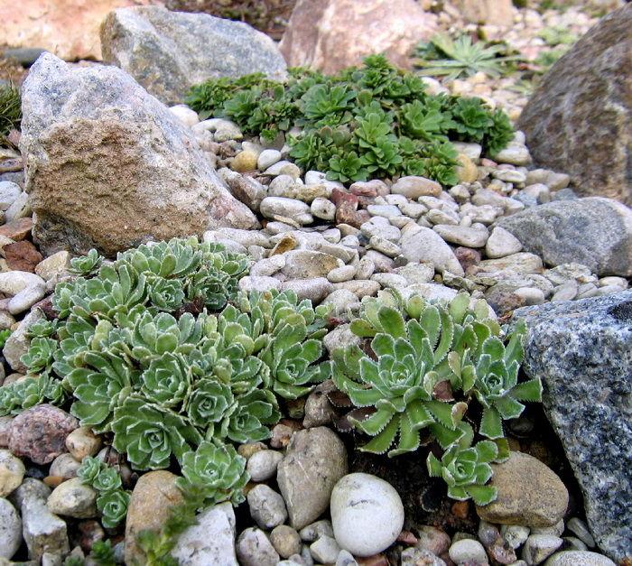 Рокарий - описание видов. Фото инструкция как посадить 63