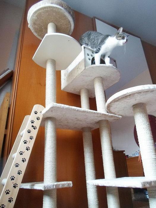 Кошачий лабиринт своими руками