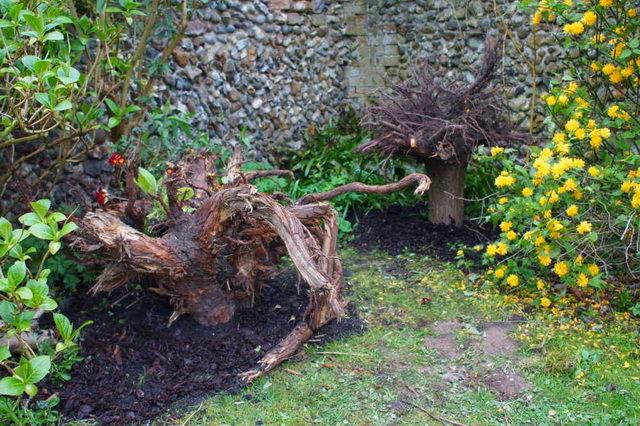 Сад корней своими руками 82