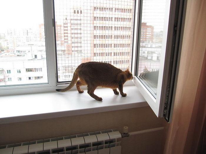 Сетка на окно для кошек своими руками 39