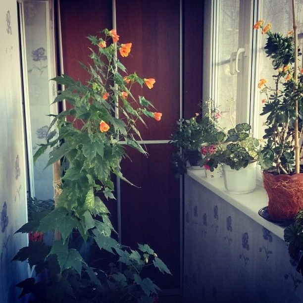 Фото сад на балконе своими руками